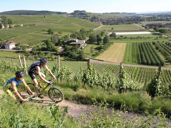 Mountainbikefahren in den Weinbergen um Auggen