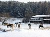 Winter auf der Pleasure-Ranch im Ortsteil Roßbach bei Chamerau