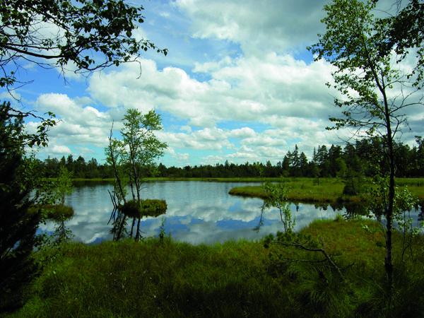 Wildsee am Kaltenbronn im Murgtal