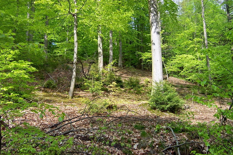 Karlsbergwald