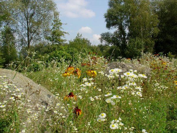 Üppige Flora im Naturdenkmal Gundelau in der Gemeinde Niederalteich im Deggendorfer Land