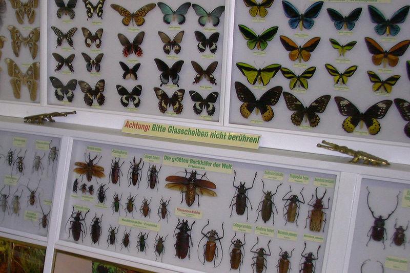 Insektenmuseum Ottweile