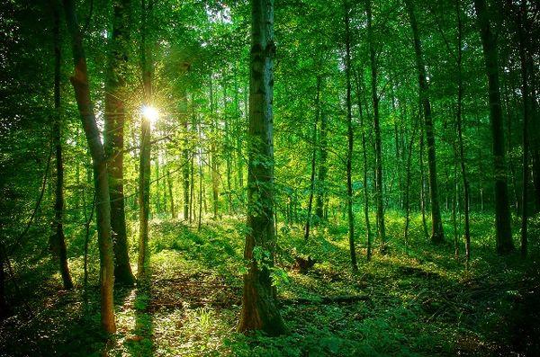 urwaldähnliche Wälder