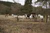 Pferde auf der Koppel von Violas Wunderwald