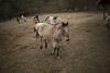 Pferde in Violas Wunderwald