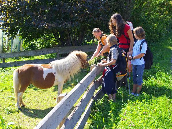 Streicheleinheiten für das Pony im Kinderlandort Thrumansbang im Bayerischen Wald