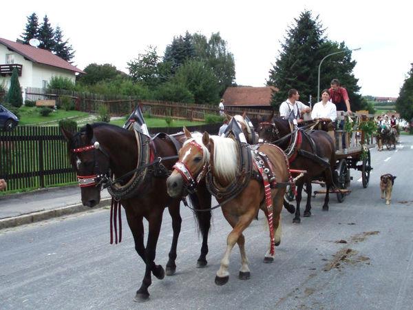 Pferdekutschenfahrt auf dem Holmerhof bei Wiesenfelden