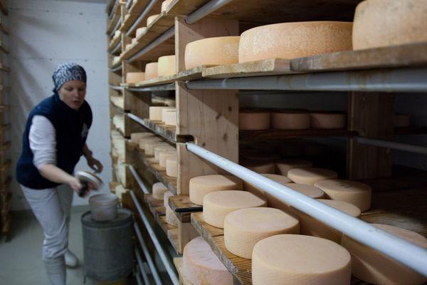 Die Käselaibe werden mit Salzlake eingeschmiert, gewendet und zur weiteren Reifung auf Gestellen gelagert.