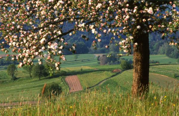 Unterwegs im Naturpark Bayerischer Wald