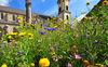 Wildblumen vor der St. Michaels Kirche in Abtsgmünd
