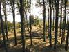 Blick durch den Wald zum Aussichtsturm auf dem Hirschenstein