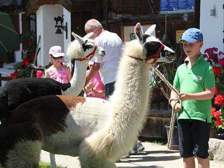 Geführte Wanderung mit Lamas vom Berghof Steinbauer in Achslach-Lindenau