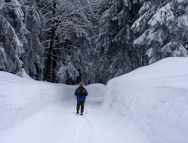 Winterwanderung auf der Forststraße bei Achslach