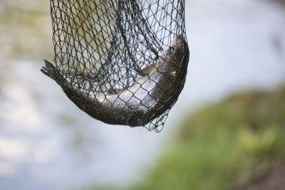 Fisch im Netz