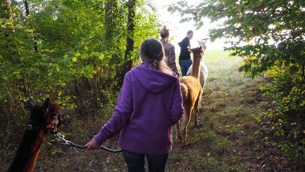 Ein unvergessliches Erlebnis: Mit Alpakas wandern