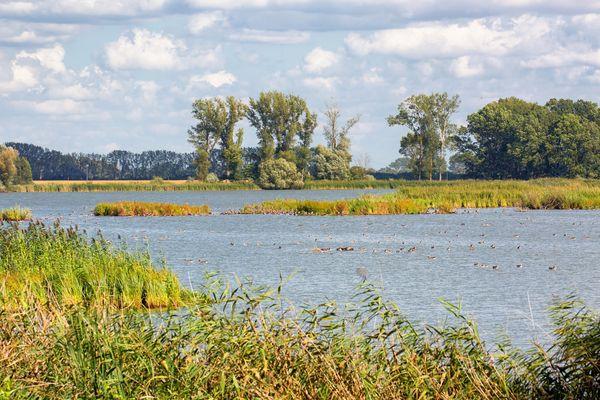 Altfriedländer Teiche, Foto: Seenland Oder-Spree e.V./Florian Läufer