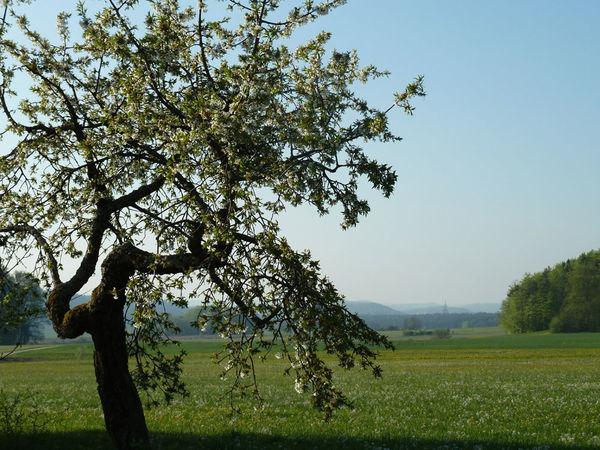 Streuobstwiese bei Amberg im Naturpark Hirschwald