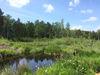 Das Arracher Moor mit Moorlehrpfad