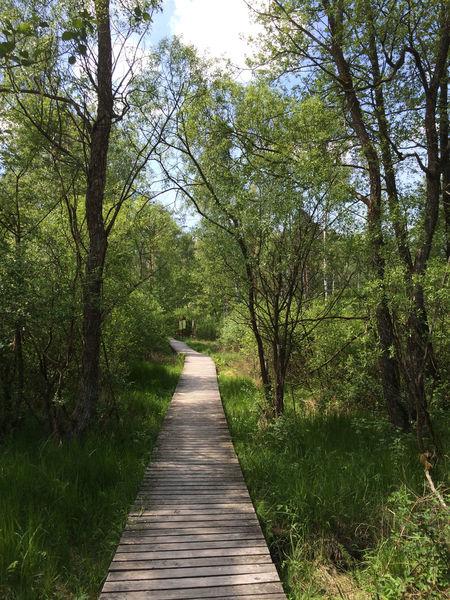 Der Bohlenweg durch das Moorgebiet bei Arrach