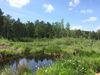 Wunderschöne Natur erleben im Arracher Moorgebiet