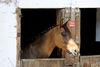 Pferd auf dem Reiterhof Mühlbauer