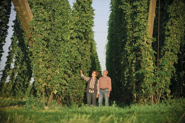 Spaziergänger in einem Hopfengarten in der Hallertau