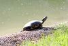 Schildkröte im Kurpark