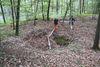 Hertinger Wald