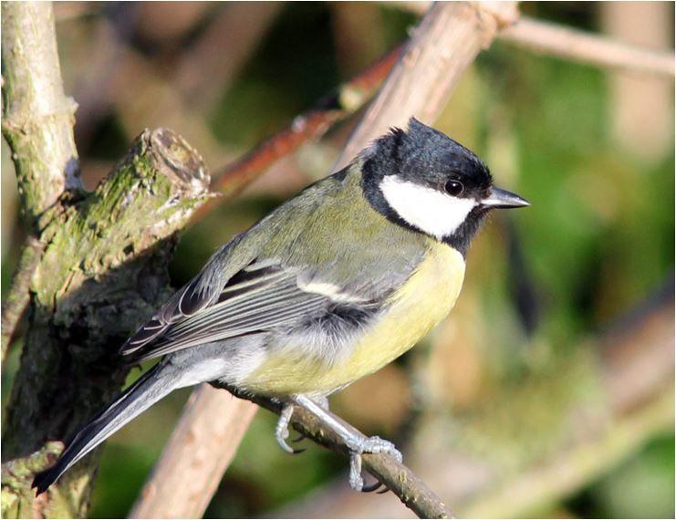 Vogel im Kurpark