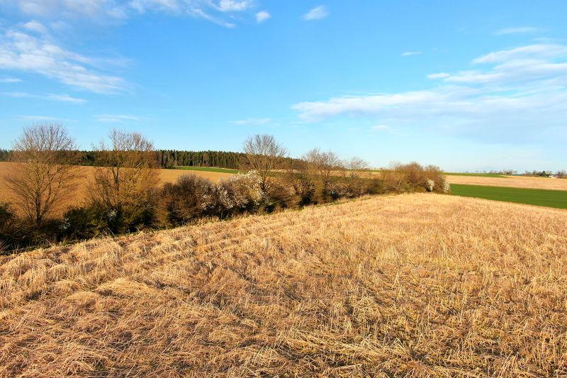 Hecke zu Vegetationsbeginn