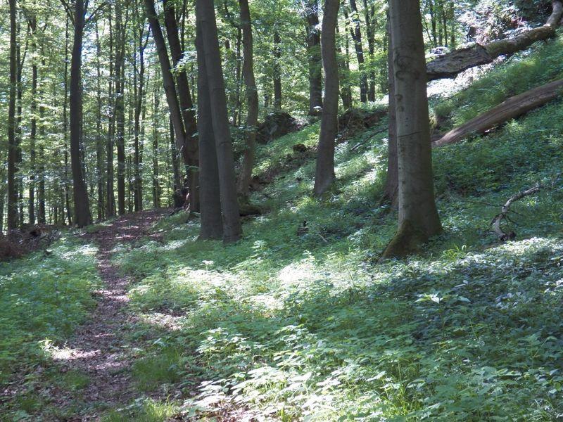 Emstaler Waldtrack