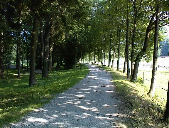 Mit Bäumen umwachsener Spazierweg im Kurpark Bad Feilnbach.