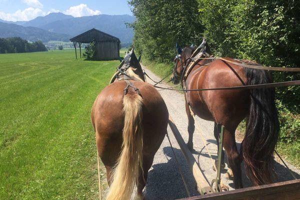 Pferdekutschenfahrten Kriechbaumerhof