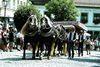 Prächtig geschmücktes Pferdegespann beim Rosstag in Bad Kötzting