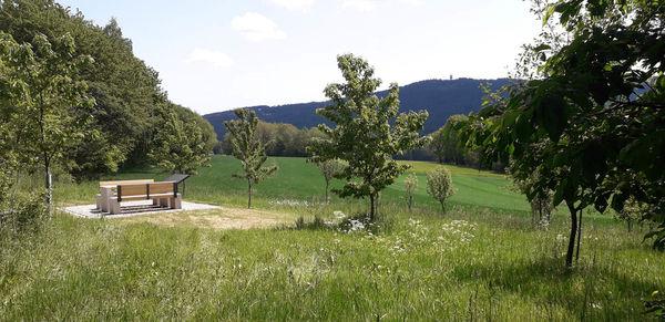 Einer der fünf Blickpunkte um Bad Neualbenreuth: Die Streuobstwiese nahe des Grenzlandturmes