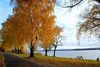 Herbst in Wendisch Rietz am Scharmützelsee, Foto: Morgenstern