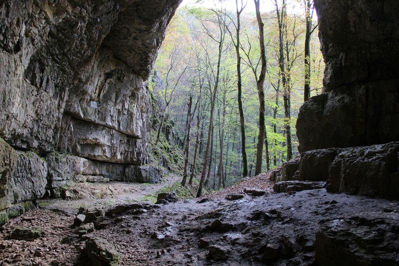 The Forest Karte Höhlen.Falkensteiner Höhle Kurverwaltung Bad Urach