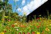Blick von einem bunten Blumenbeet im Kurpark zum Gradierwerk I.