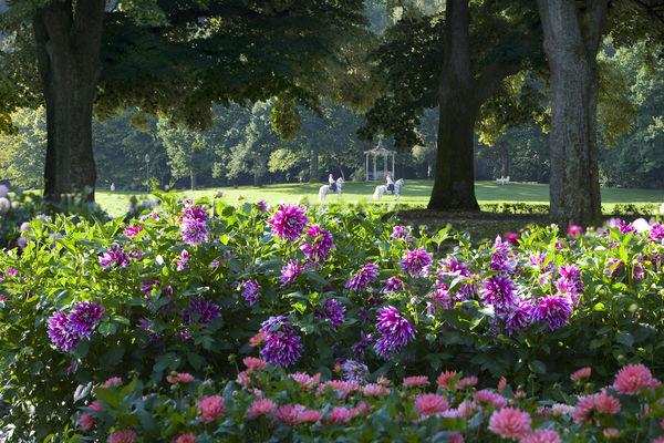 Dahliengarten Baden-Baden