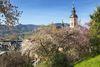 Pflanzenvielfalt auf dem Florentinerberg