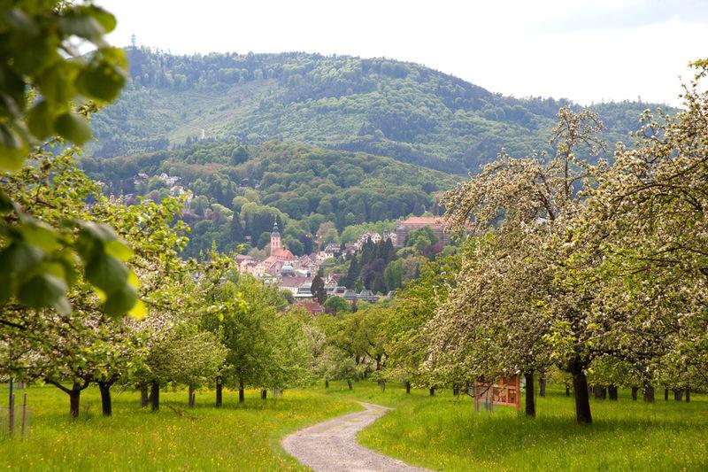 Panoramaweg Teilstrecke: Bernharduskirche bis Bahnhof Merkurwald