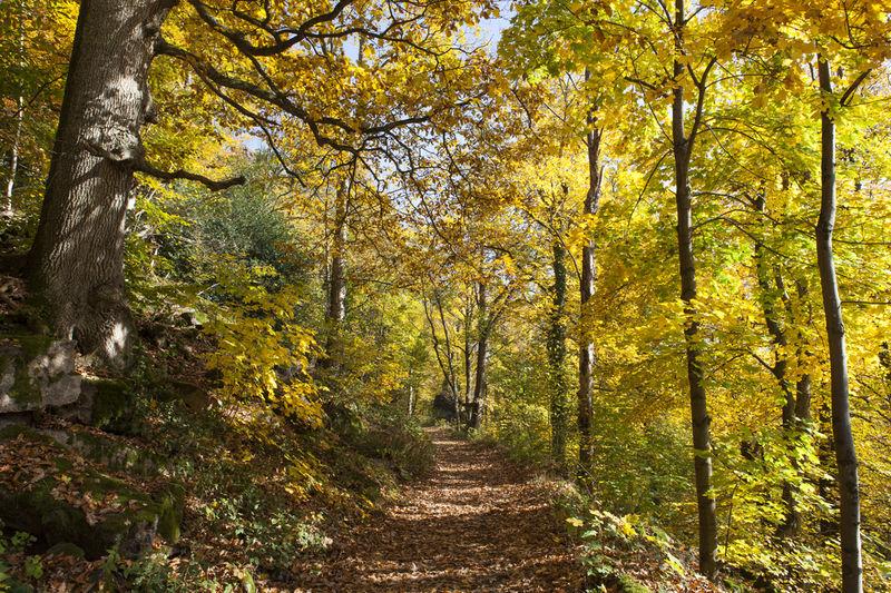 Panoramaweg Teilstrecke: Waldparkplatz Malschbach bis Tiergarten