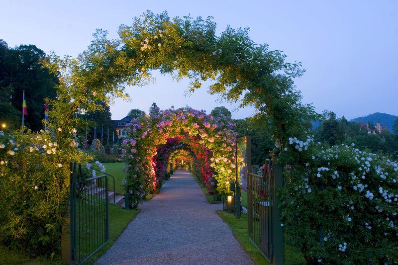 Rose Society Garden Blackforest Tourism Schwarzwald Tourismus Gmbh