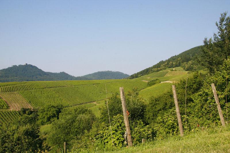 Schartenberg circular trail
