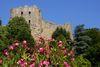 Burg Baden im Sommer