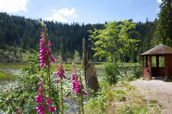 Rast am Huzenbacher See