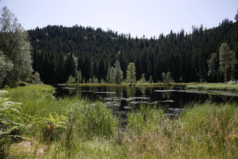 Idylle am Buhlbachsee