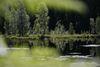 Die Ruhe am Buhlbachsee lädt zum Entspanne ein.