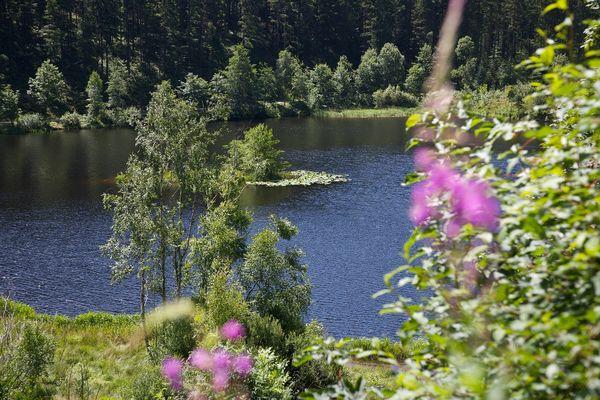 Der Sankenbachsee liegt idyllisch mitten in der Natur.