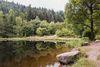 Das Ufer des Sankenbachsees